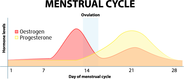 Menstrualcyclegraph..fw